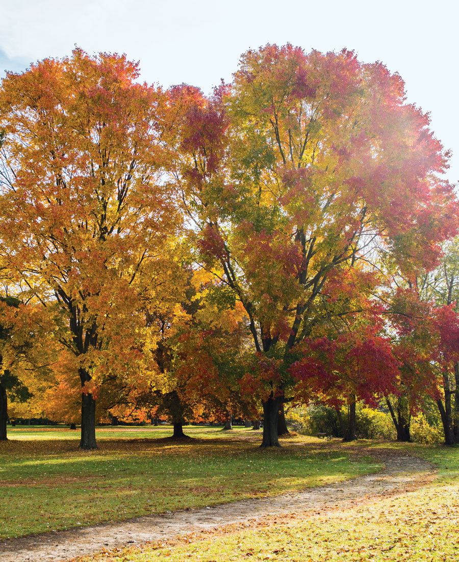 <b>Fall: </b> The cooler days of autumn—and trees bursting with glorious color—bring a crisp energy to our days.