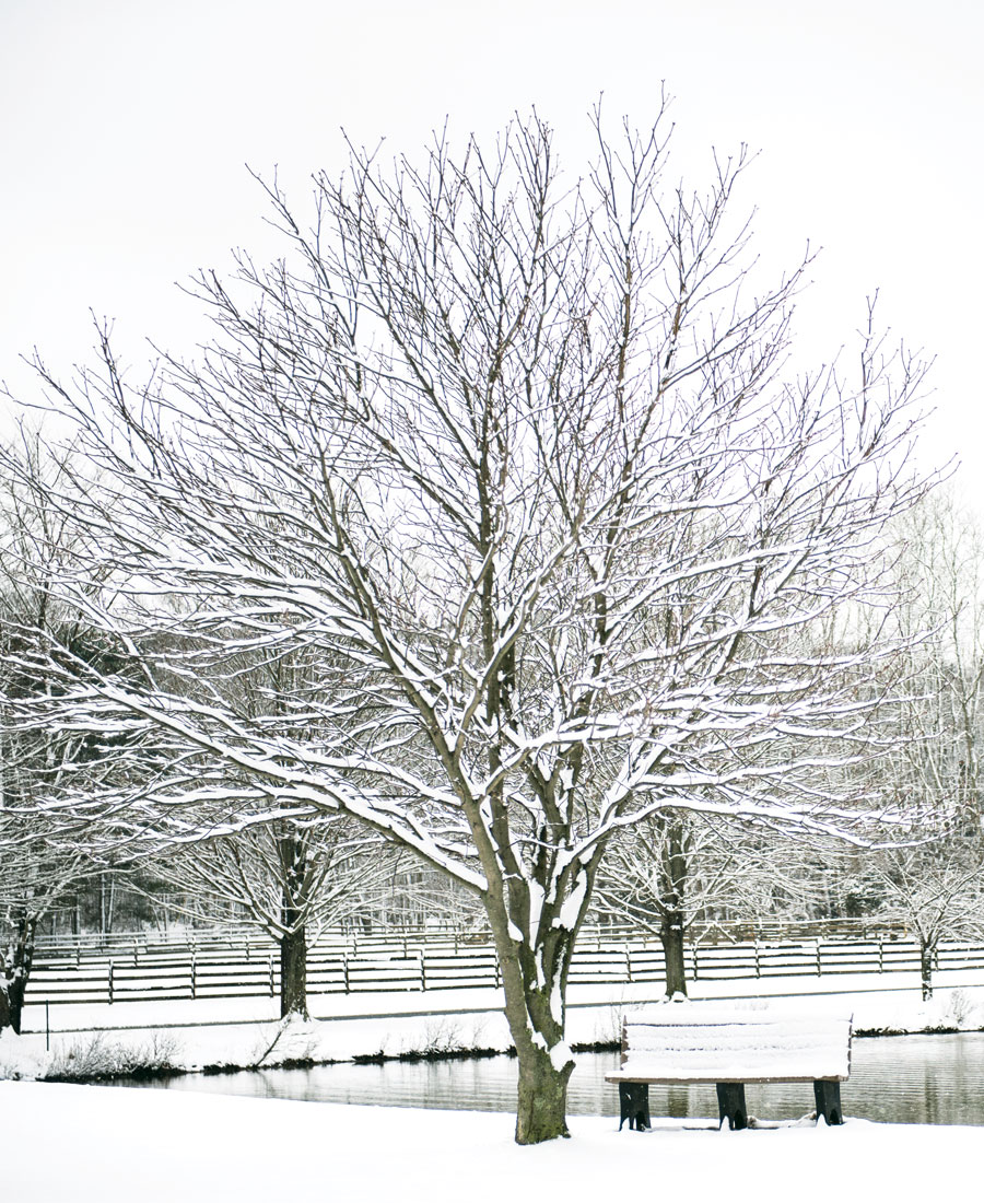 <b>Winter: </b>A soft snowfall covers the ground with a pristine blanket of white. (Temporary, yes, which makes it all the more achingly beautiful.)